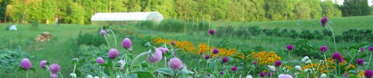Sandyfoot Farm | Growing a market garden in the Piedmont of Virginia