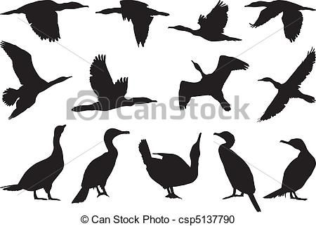 images of cormorants - Google Search