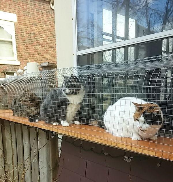 outdoor DIY cat enclosure