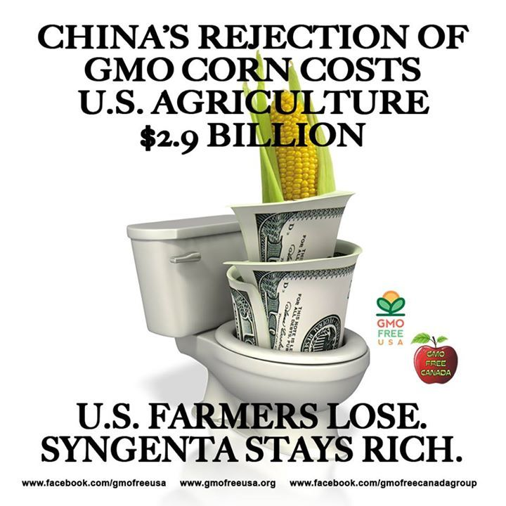 Since mid-November, China has turned away 1.45 million metric tons of U.S. corn because of the presence of unapproved Syngenta GMO varieties. The rejections have depressed U.S. corn prices by an estimated 11 cents per bushel, accounting for projected losses of $1.14 billion for U.S. corn farmers for the last nine months of the marketing year that ends on August 31.   http://www.rawstory.com/rs/2014/04/17/chinas-ban-on-gmo-corn-costs-us-up-to-2-9-billion-grain-association-says/