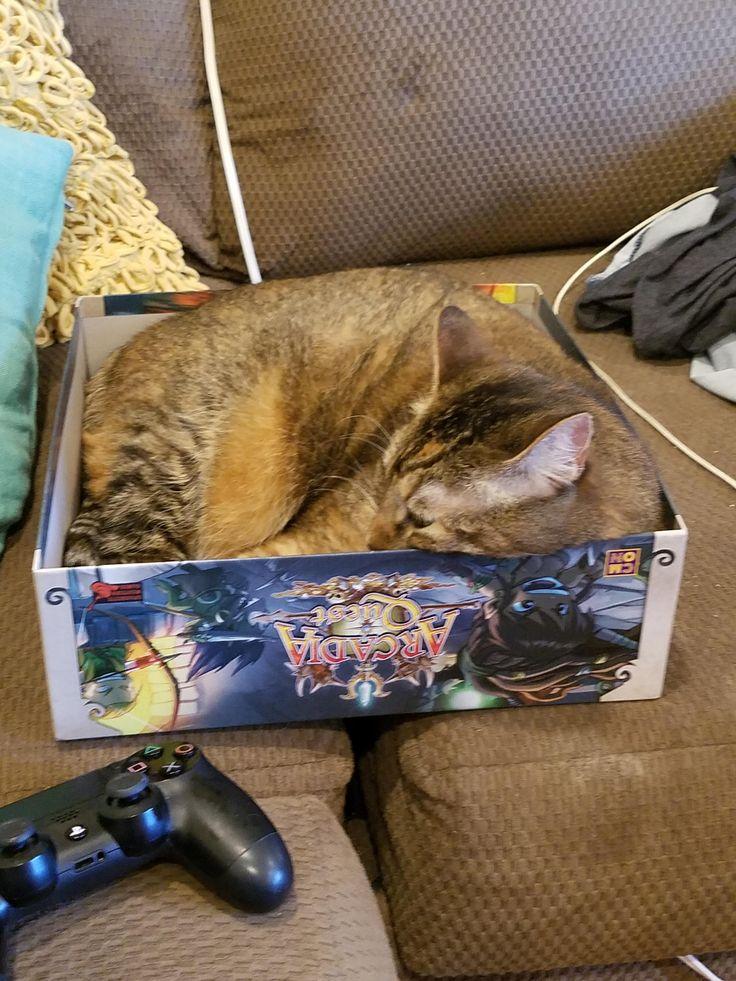 $100 Game turned cat trap http://ift.tt/2sr4S4C