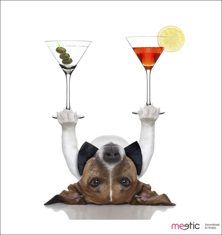 #weekend #venerdì #dog #cane #drink #finesettimana #buonweekend #cocktail #friday #TGIF