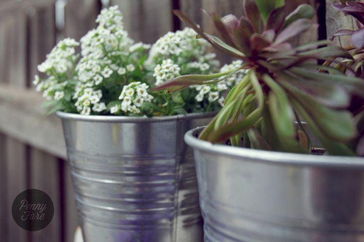Garden ladder, potted plants.