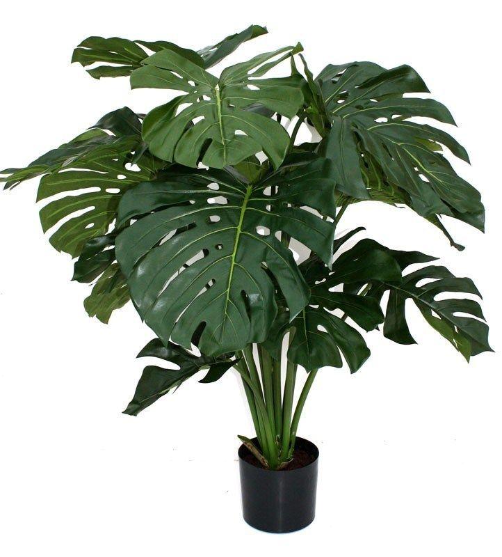 القفص الصدري سيللوم فيلودندرون أزهار و نباتات الزينة Plant Decor Floor Plants Plants