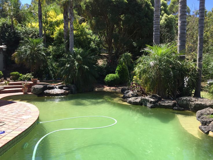 Natural Pool landscape