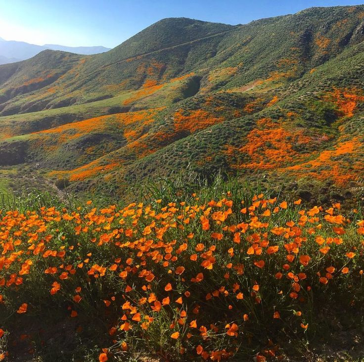 9 Magical Photos of California's Wildflower Super Bloom | Lake Elsinore, California | Credit: