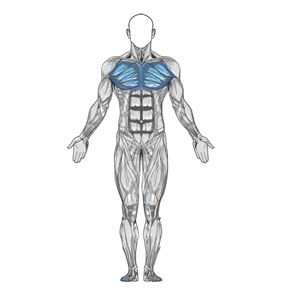 Exercise Guide and Videos-body building.com