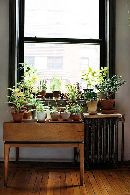 plants & radiator/great idea, for people who actually remember to water their plants. Perhaps a cactus garden in my dining room?
