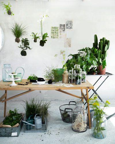 Nieuw groen in huis: planten op tafel en zwevend erboven. Productie: Nicoline Olsen en Fillipa Asved. Fotografie: VKStock