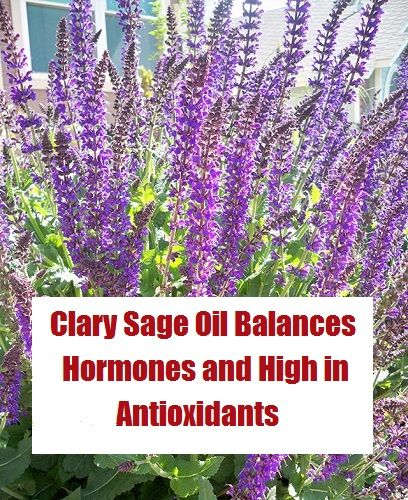 * Clary Sage Oil and the Many Health Benefits    Clary sage essential oil is a natural source of antioxidants that is used to treat depression, infections a