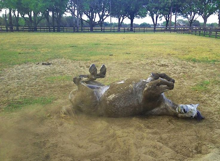 These things are why horse people are a tad crazy... What things do you think are just the worst? #HorseProblems #Reality