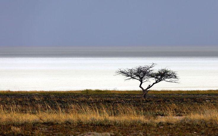 Most Amazing Salt Flats: Etosha pan, Namibia