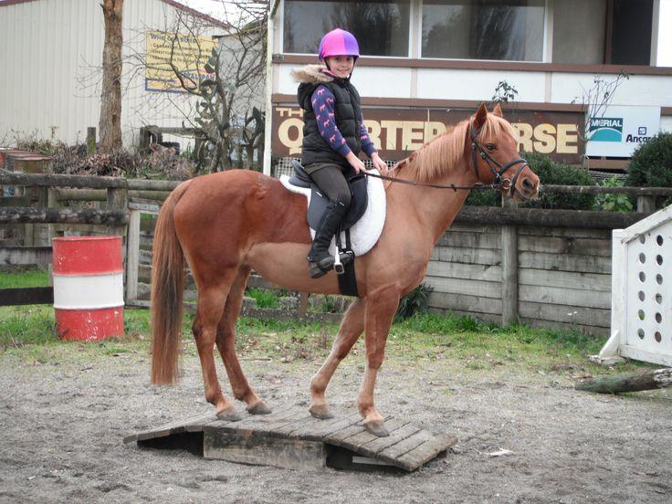 Waikato Equestrian Centre 2013