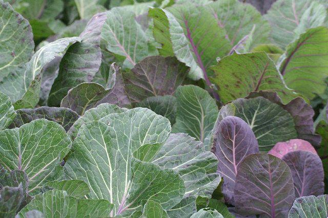Cómo incoporar hojas verdes a la alimentación diaria