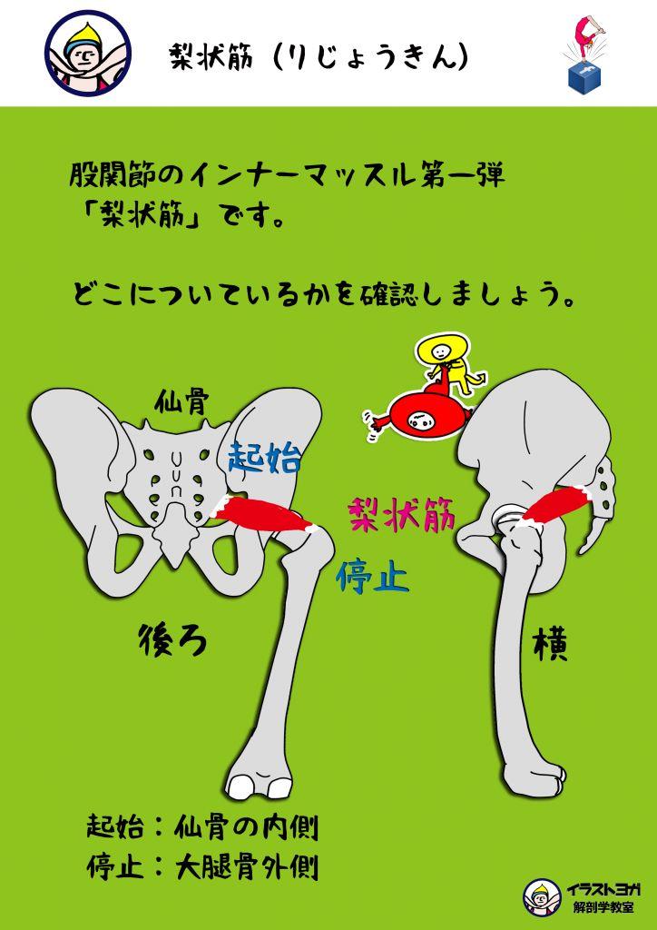 梨状筋|ヨガ解剖学