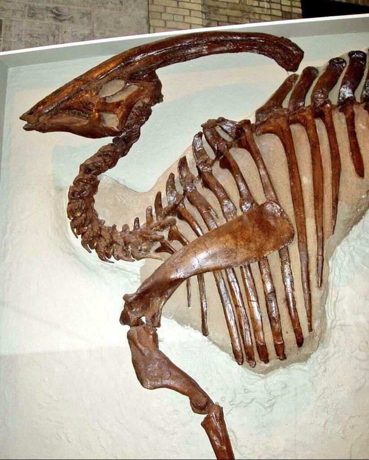 fossils Dinosaur fossils, Fossil bones, Amber fossils