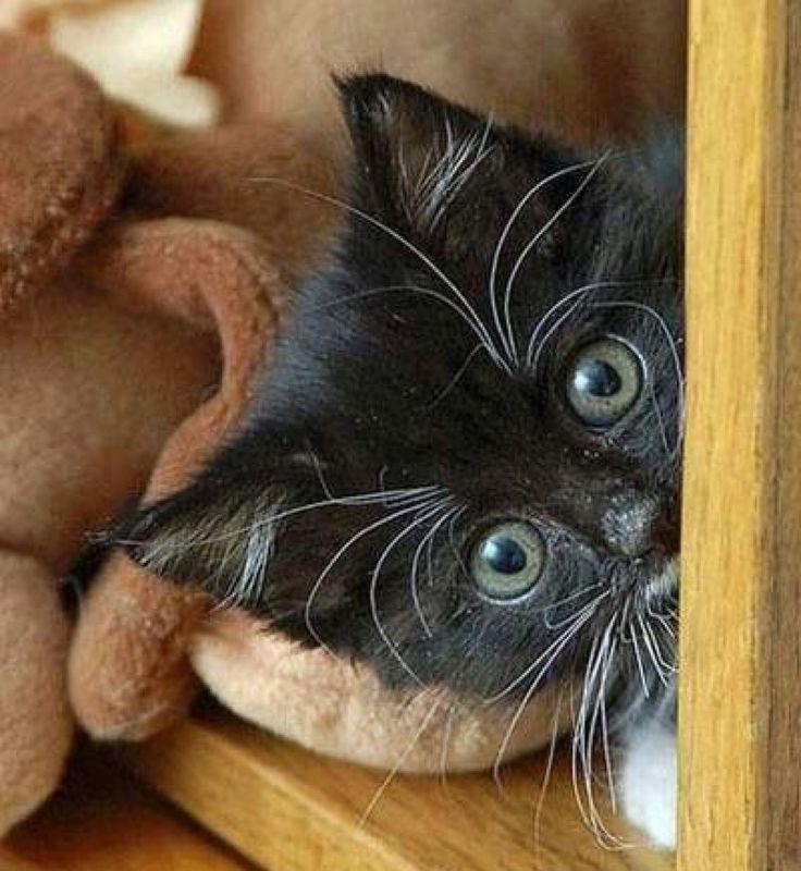 It's a peek-a-boo cutie…..