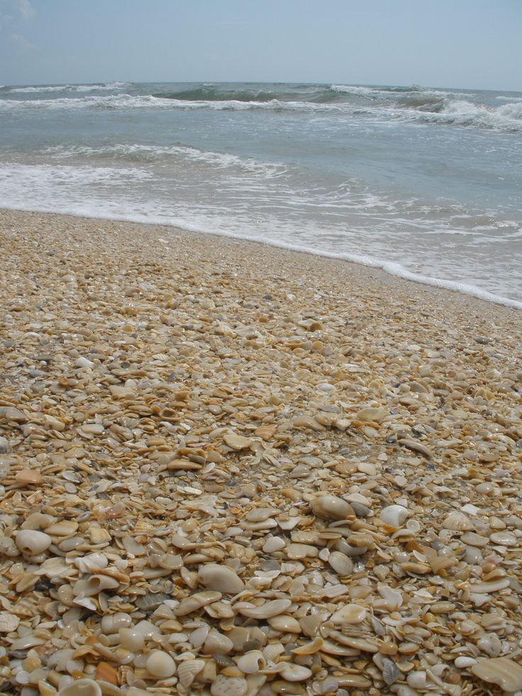 Shell Beach Padre Island National Seas 4x4 Only I Took This Picture