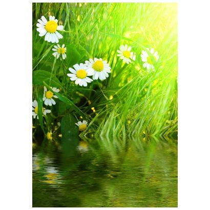 Daisy #postcards