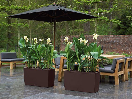 die besten 17 ideen zu sichtschutz pflanzen auf pinterest. Black Bedroom Furniture Sets. Home Design Ideas