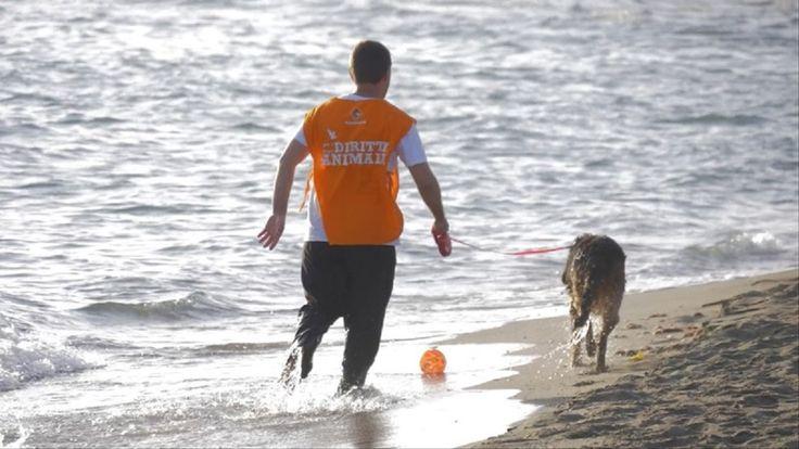 Una giornata speciale, fatta di tuffi, spruzzi e corse sulla sabbia, quella organizzata dalla LAV per suggellare la nuova vita dei cani provenienti dal can
