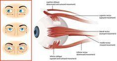 Natürlich gibt es chirurgische Hilfe, doch Laser-Chirurgie und Brille sind nicht die einzige Möglichkeit, deine Sehkraft zu verbessern und zu erhalten. So wie auch dein Körper Belastungen und Alterserscheinungen ausgesetzt ist, so geht es auch dem Auge. Und genauso, wie wir unseren Körper trainieren, um fit zu bleiben, so können wir auch unsere Augenmuskeln trainieren. … Weiter lesen »