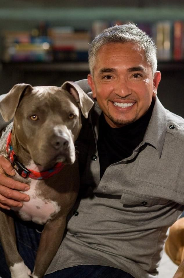 "Five years before Cesar Millan's TV show of the same name, a positive reinforcement trainer, Paul Owens, was using the ""dog whisperer"" name. Description from thefemalecelebrity.com. I searched for this on bing.com/images"