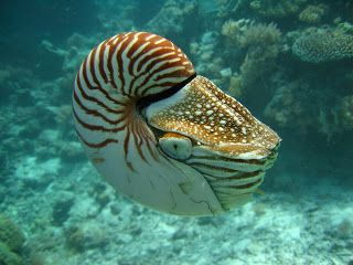 796 best oceans and ocean life images on pinterest marine life 796 best oceans and ocean life images on pinterest marine life under the sea and water animals publicscrutiny Images