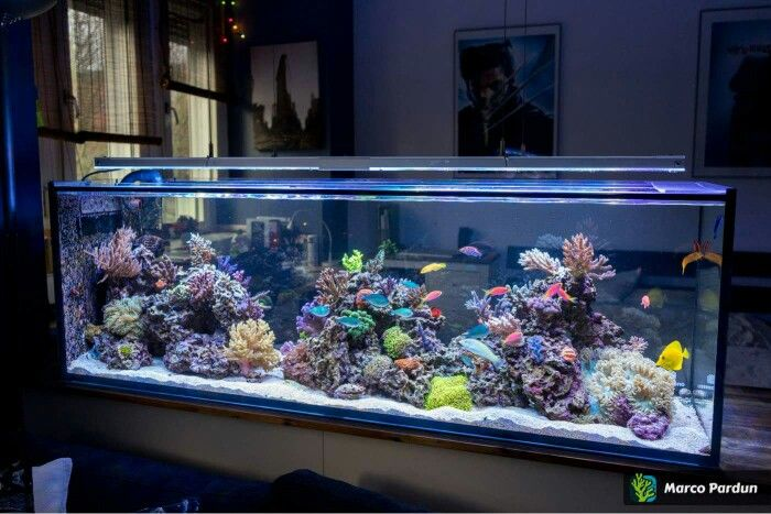 #marinetank #reeftank #saltwatertank #marineaquarium #dreamaquarium #dreamtank…