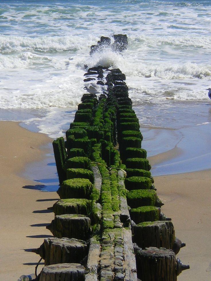 https://flic.kr/p/pU8hbR | quai et algues