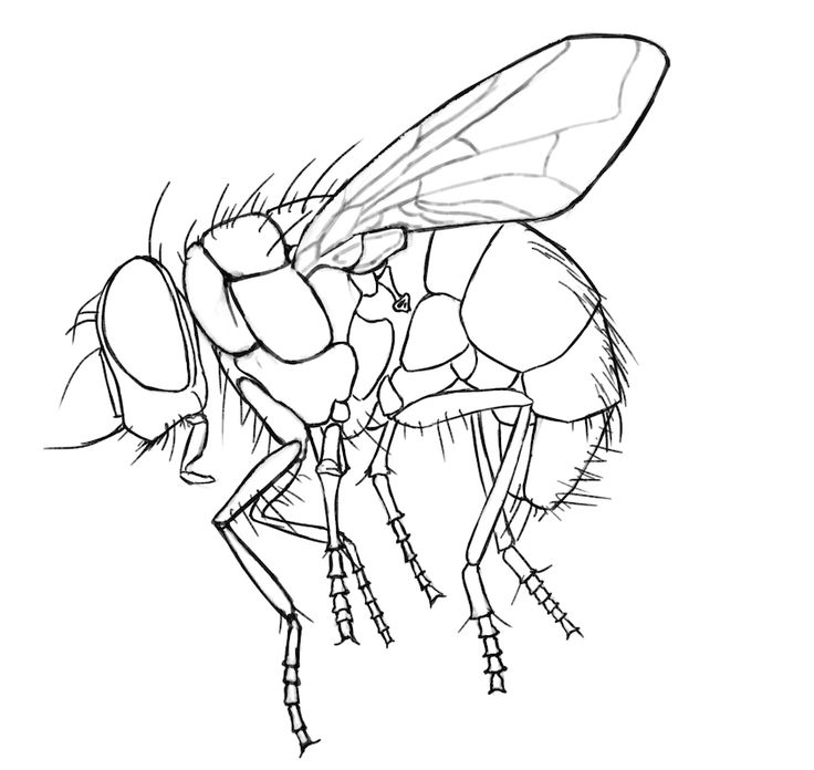 25 best Fly images on Pinterest   Anatomy, Anatomy reference and Hands
