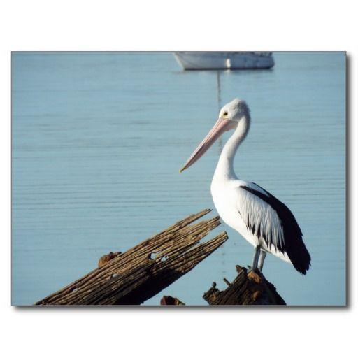 pelican haven