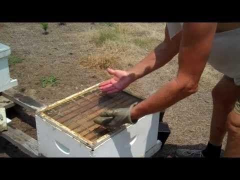 Tips for finding the Queen, Honey Bee Queen - this guy is so great!
