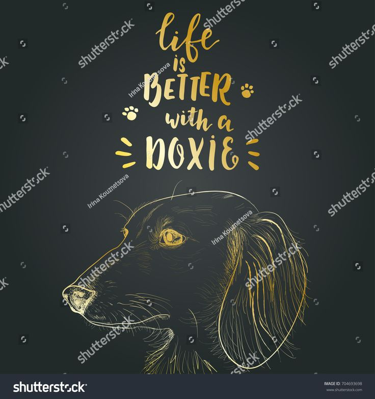 """Dachshund hand drawn vector portrait for t-shirt design, print and greeting cards. Hand drawn lettering quote """"Life is better with a doxie"""". Pet love background."""