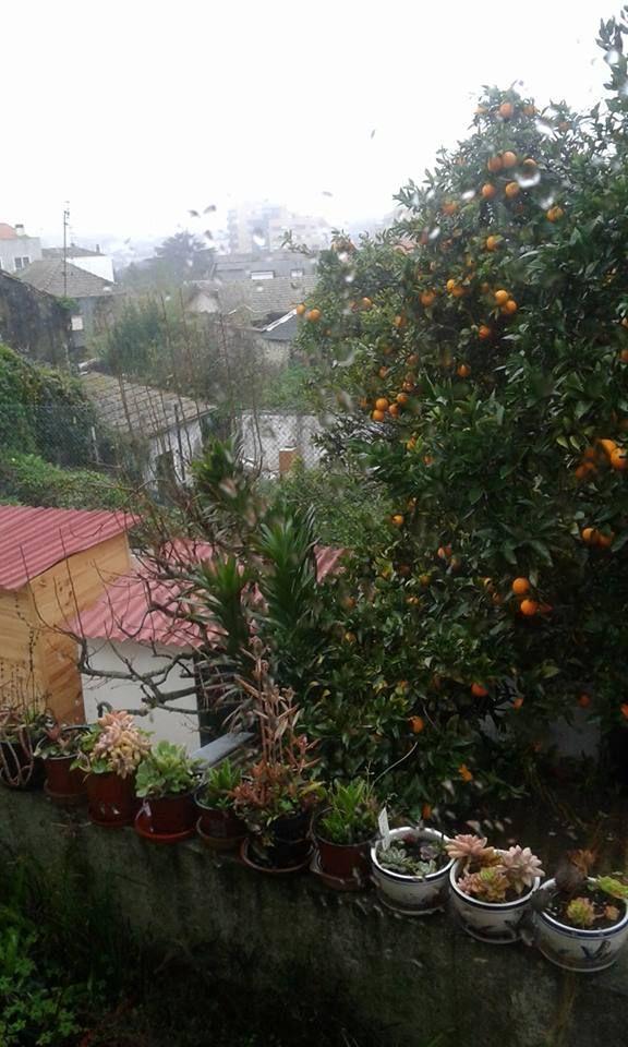 Chuva no Porto - f. Mª Emília Lima