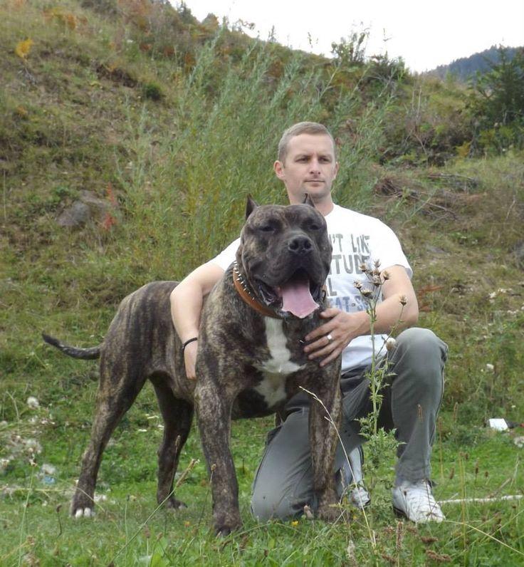 Largest Dog Kennel