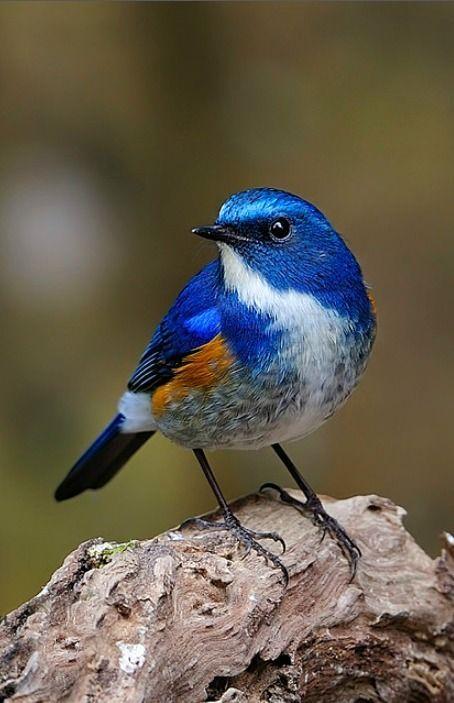 Beautiful bird from Tumblr                                                                                                                                                                                 Mais