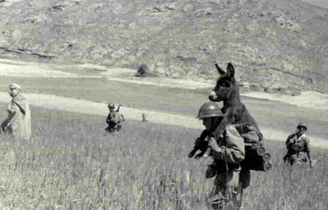sweet relief...donkey carried by wwii soldier link http://www.freerepublic.com/focus/chat/3026942/posts