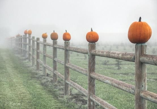 Fall Facebook Cover Art - Pumpkins on a Fence in the fog