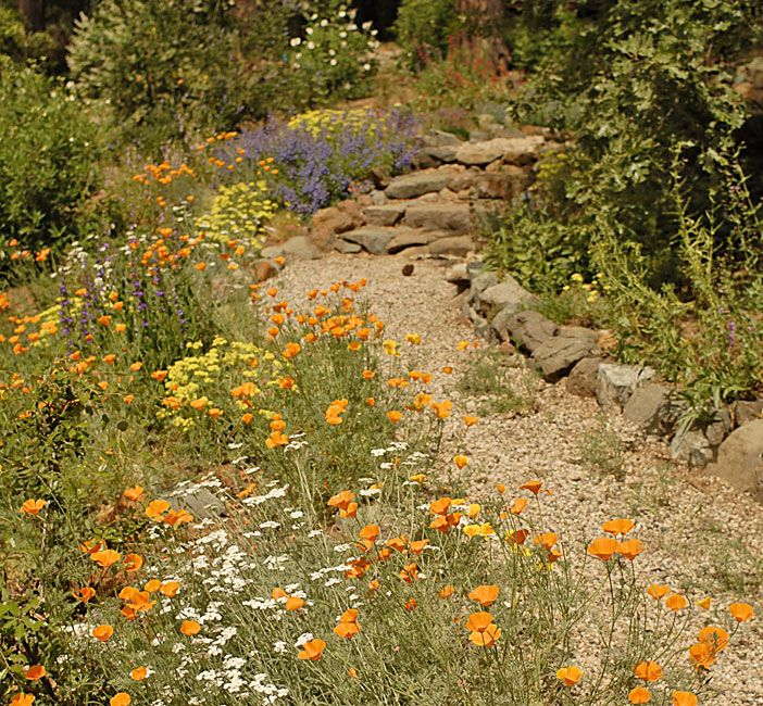 32 Best Images About California Native Plants On Pinterest
