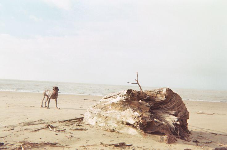 Untitled (Disposable Camera) #disposablecamera #dog #beach #cycomind