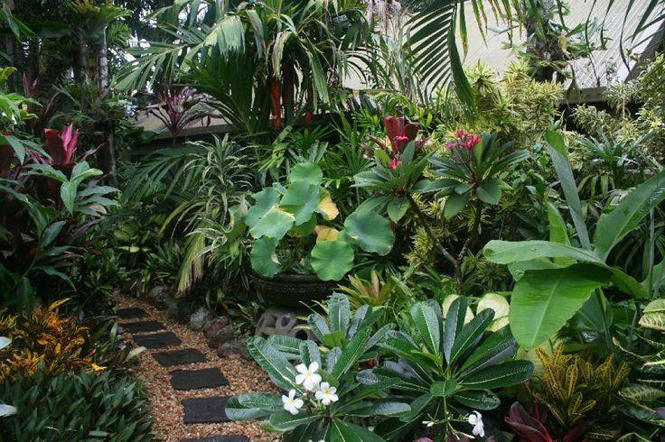 Plantas tropicales hoja rota buscar con google ideas for Plantas ornamentales tropicales