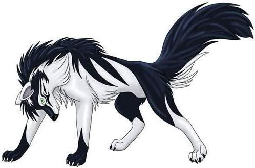 A black and white wolf anime. | Wolves and Foxes ...