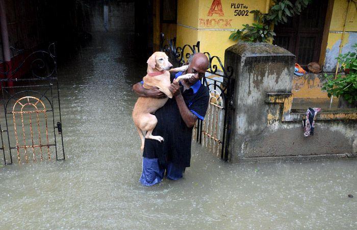 В штате Тамилнад на юге Индии уже пятый день не прекращаются проливные дожди, которые вызвали сильные наводнения и затопления. Более 50 человек стали жертвами стихийного бедствия.