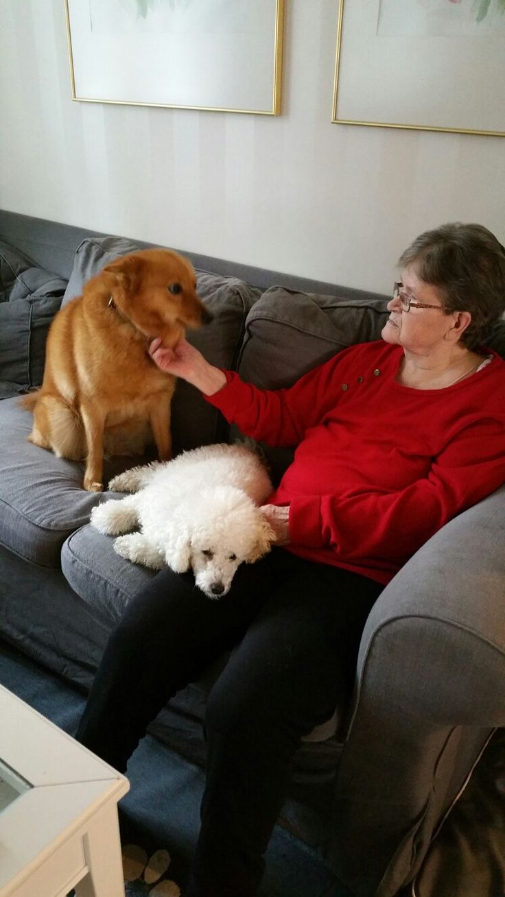 Therapy dogs for my mum