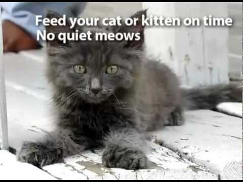 aoa like a cat lyrics