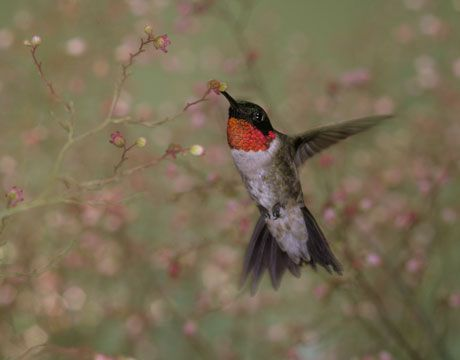Invest in Beauty: Attract Hummingbirds With Native Plants