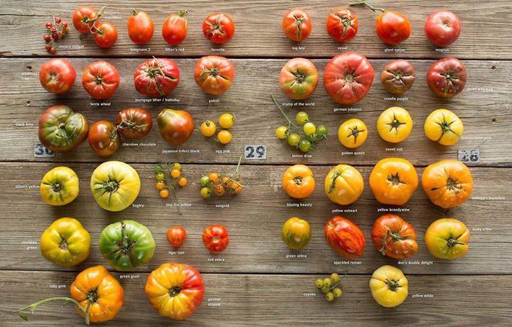 """Connaissez-vous les tomates patrimoniales ou ancestrales (les fameuses tomates """"heirloom"""" en anglais)?"""