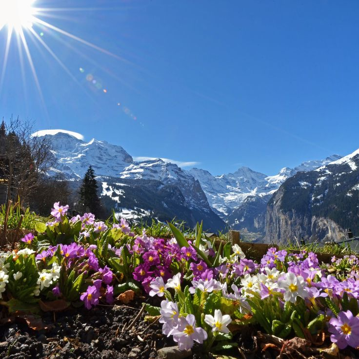 Wengen Switzerland - spring is coming Photo by Rolf ...