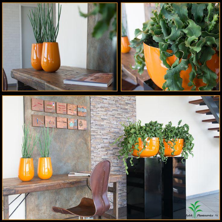 Podier og krukker i orange farver tilsat lidt kobber vægpynt. #orange #kobber #indretning #euphorbia #interiør